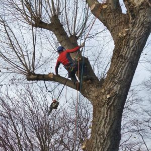 Mark Stewart Tree Surgeon