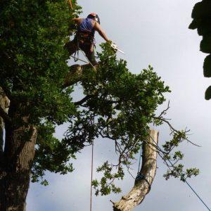 Mark Stewart Tree Surgeon