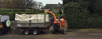 Mark Stewart Tree Services