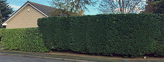 Mark Stewart Hedge Maintenance